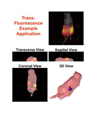 trans-fluorescence example chart